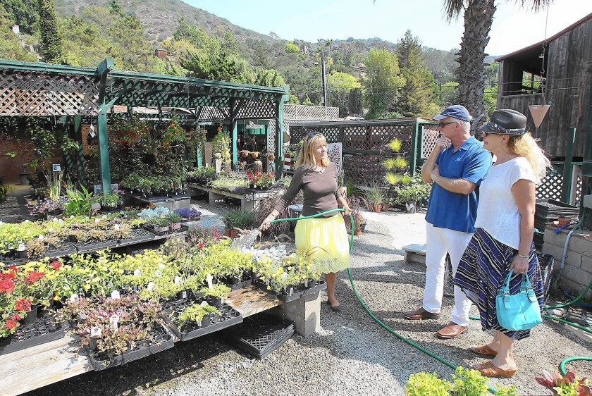 Co-owner Jocelyne Naughton waters plants while chatting with customers at Laguna Gardens Nursery. The business is closing on Dec. 31.