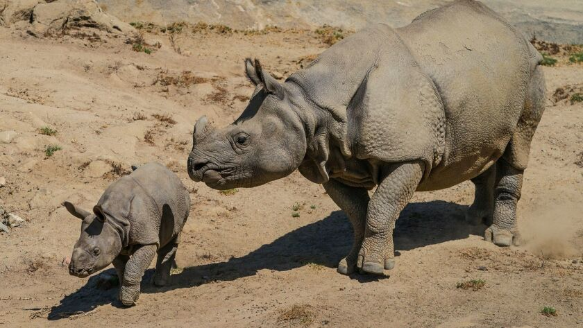 Late Summer Baby Boom at San Diego Zoo Safari Park:Say Hello to the New Arrivals