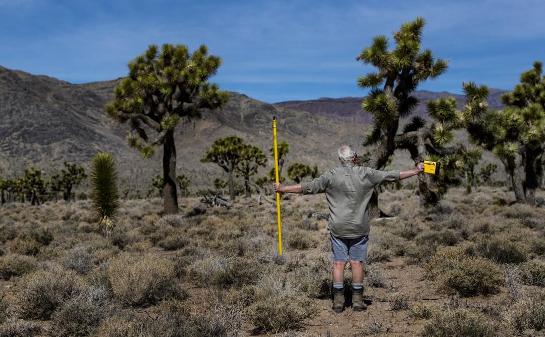 A man spreads his arms near Joshua trees.