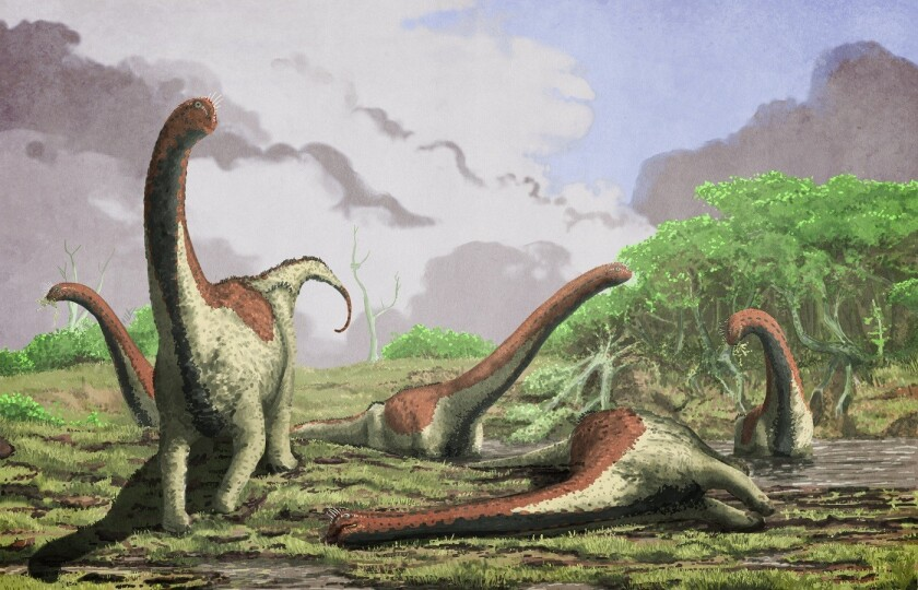 A new African titanosaur species named Rukwatitan bisepultus has been discovered in Tanzania, scientists say.