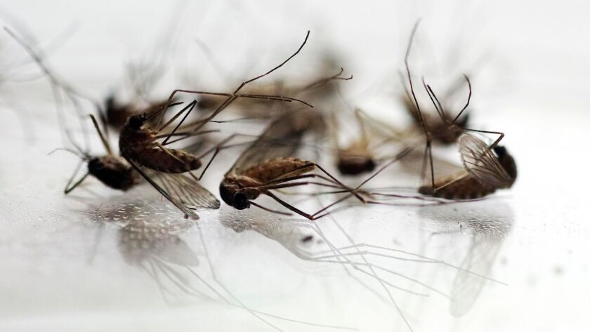 Mosquitoes that tested positive for West Nile virus have been found in 33 of California's 58 counties this year.