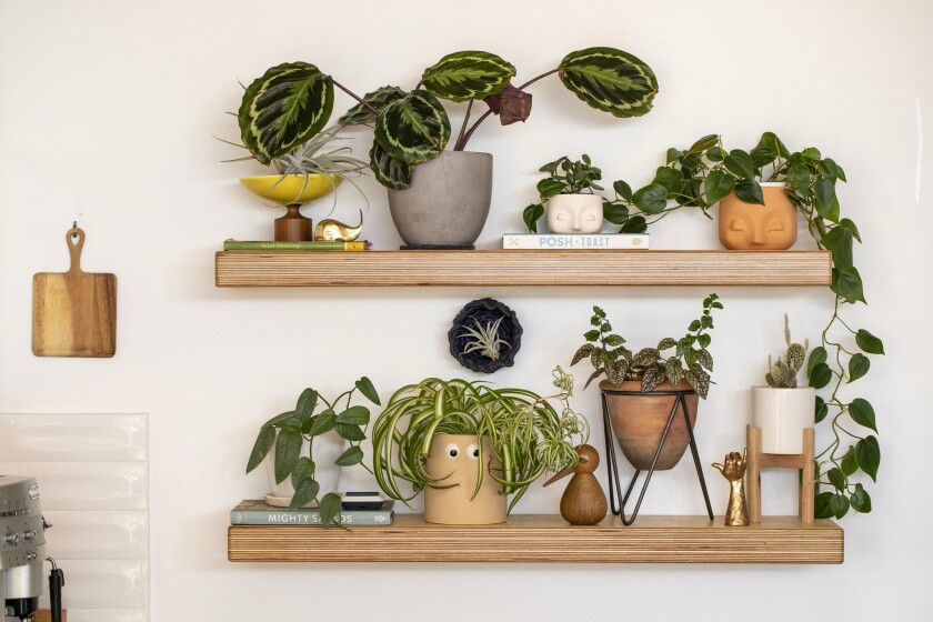 Instagram plant influencers