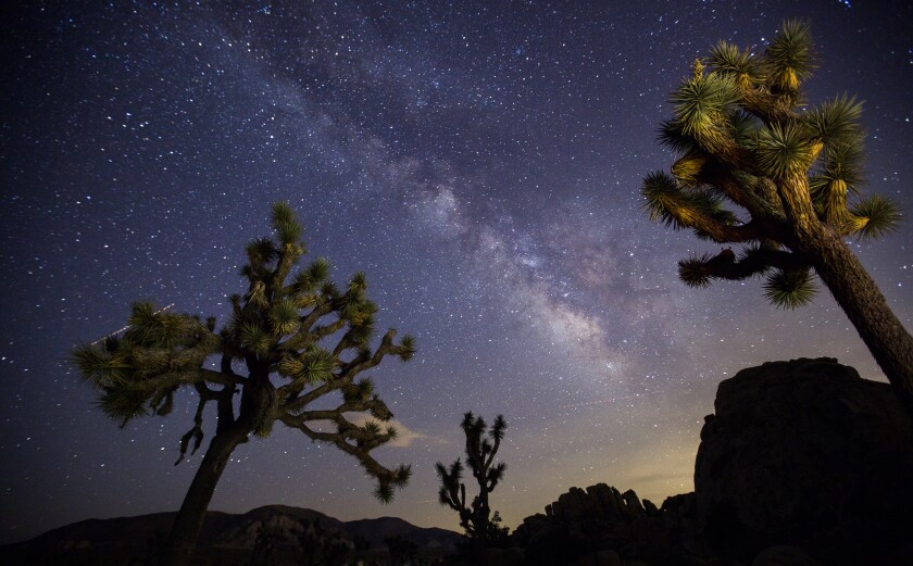 A view of the Milky Way arching over Joshua trees and rocks in Joshua Tree National Park