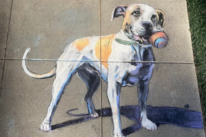 Ocean Beach artist Erick Toussaint's chalk art painting of his neighbor's dog, Biggie.