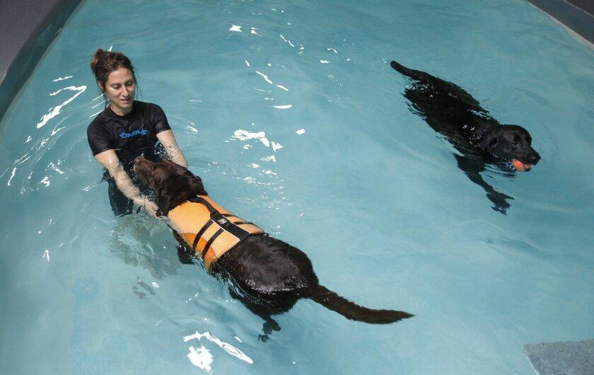 Hydro Therapy Technician Karen Kelley works with Mocha, who has arthritis, as Sambuca just has fun swimming at Tsavo's Canine Rehabilitation & Fitness Center in Del Mar on Tuesday._Mandatory Photo Credit: Photo by Hayne Palmour IV/UT San Diego/Copyright 2014 San Diego Union-Tribune, LLC
