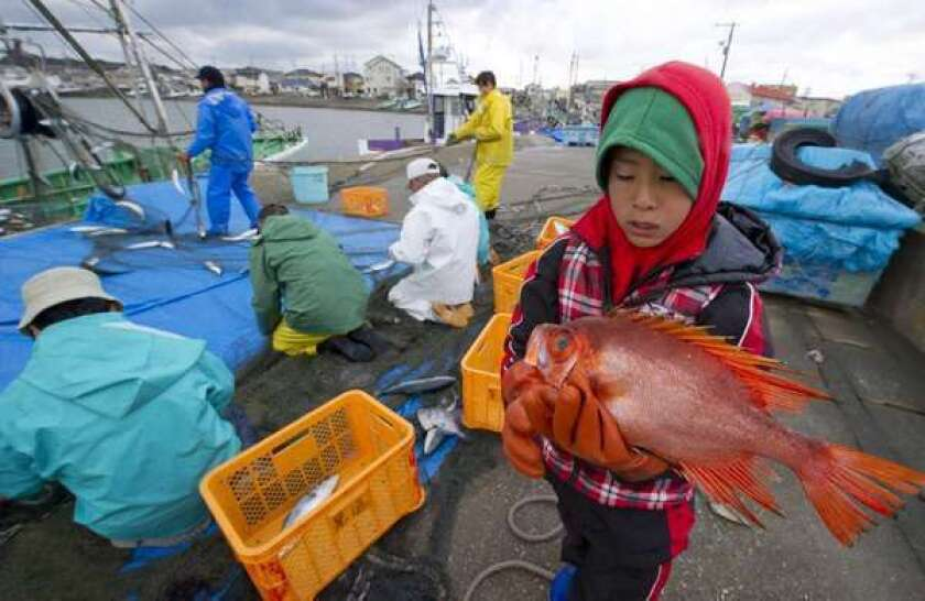 A boy holds an amberjack caught near Fukushima prefecture in March 2011. The journal Nature reports that radioactivity levels remain elevated in some fish and seafood in the area.