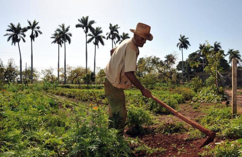 Representantes del sector agrícola de EE.UU. buscan impulsar la relación con Cuba
