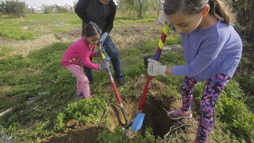 Sepideh Tabibian, right, and her sister Sima plant a a pomegranate tree with their father Mehran Tabibian during last year's Tu B'Shvat Food Forest Festival in Encinitas.