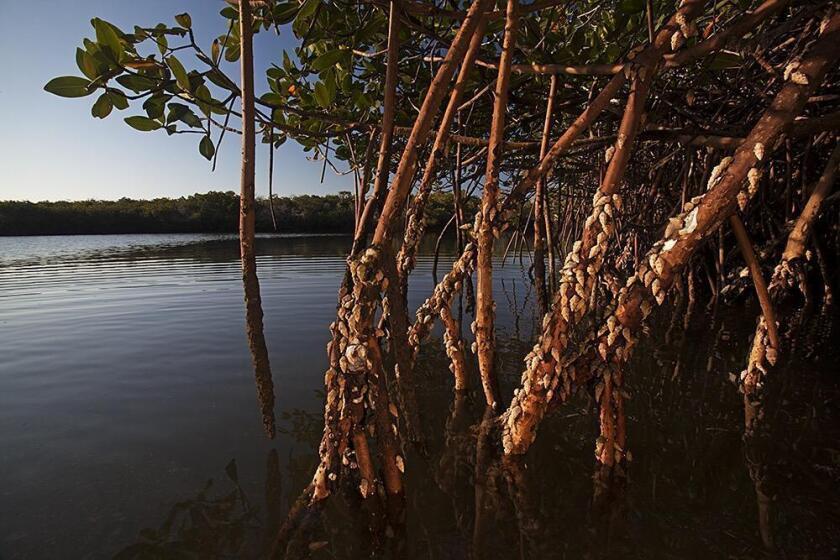 mangroves-2-20181105