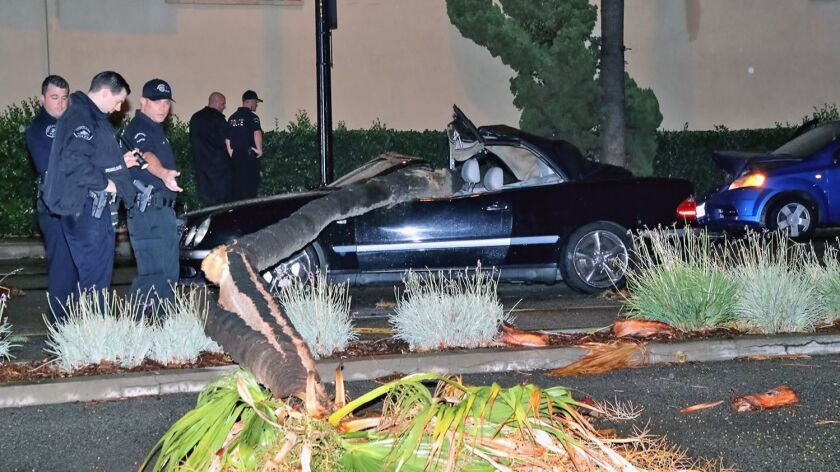 Driver of vehicle crushed by palm tree arrested, passenger