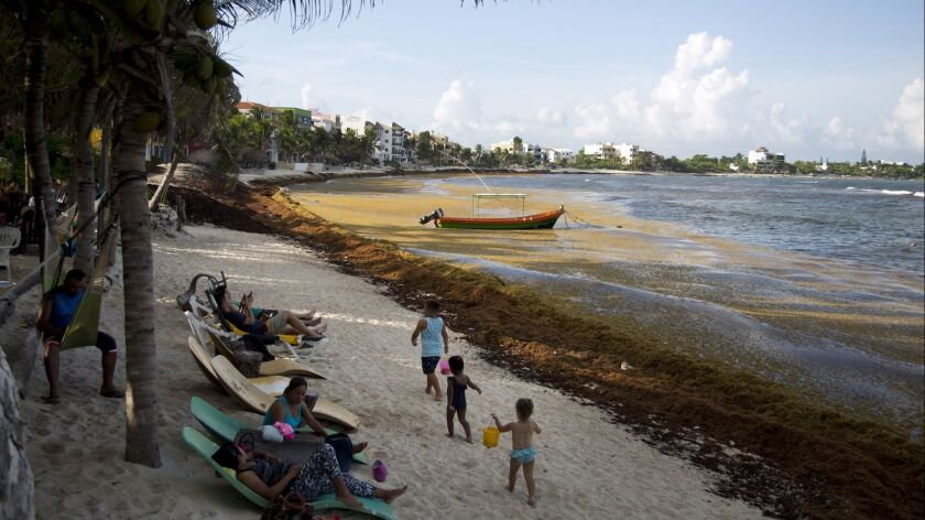 In this Sunday, Aug. 5, 2018 photo, tourists observe the beach full of sargassum in Bahia La Media L