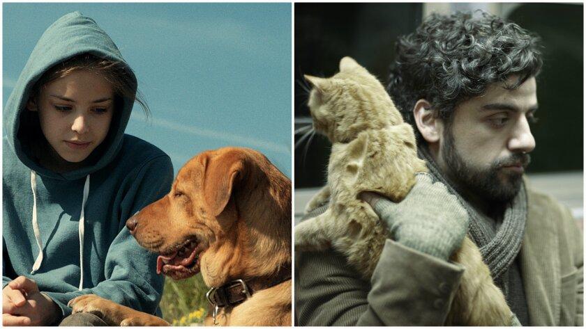"Dogs vs. cats on film: ""White God,"" left, and ""Inside Llewyn Davis."""