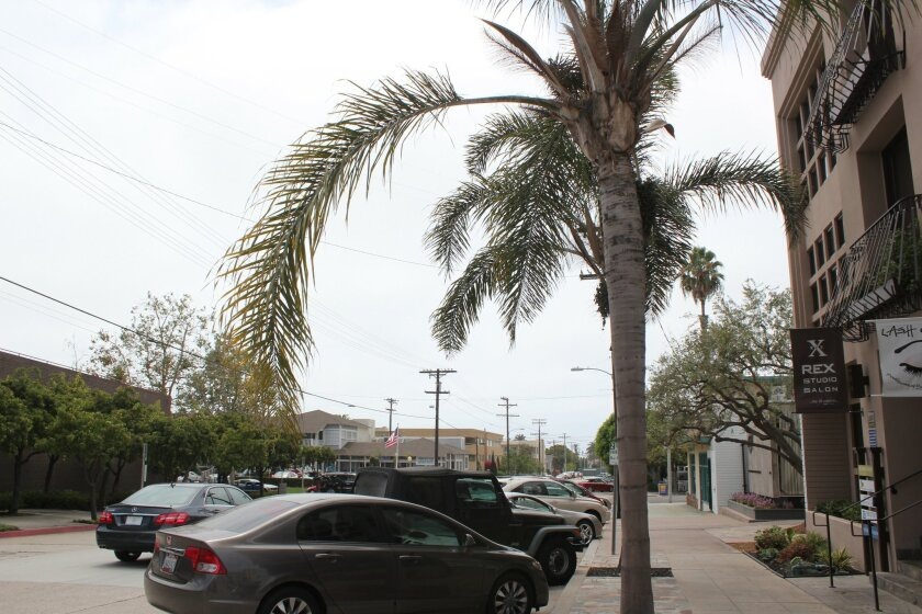 The merchants association is asking the city to start trimming trees in the Village again. Palm fronds can weight as much as 30 pounds and frequently fall off and dent cars. PAT SHERMAN