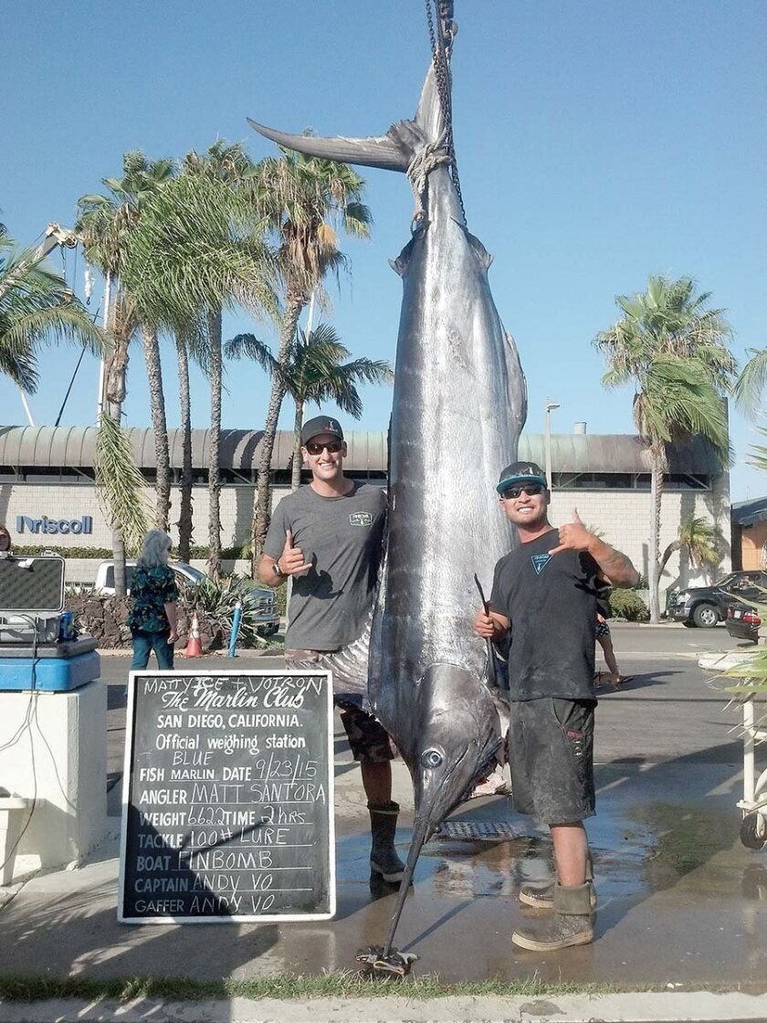 Angler Matt Santora, left, shows off his 662.2-pound blue marlin that he landed on his boat, Finbomb, just nine miles off Point Loma on Wednesday morning. Andy Vo, right, drove the boat as Santora fought the big blue for an estimated three full hours.