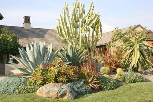Owned by Carolyn and Herb Schaer and designed by Michael Buckner of the Plant Man nursery, this San Diego garden illustrates how low-water doesn't have to mean personality-free. Pale green Euphorbia ammak variegata adds height to a section of the garden between driveway and street. Behind a boulder chosen to repeat the blues and oranges of the plants is red-flowering Euphorbia milii, a succulent shrub that blooms nonstop. The lawn area, though water-thirsty, was a requirement of the homeowner's association. Click hereto tour more gorgeous gardens.