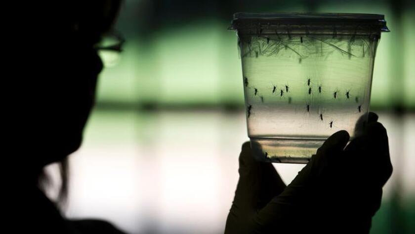 Bajo riesgo de Zika en California
