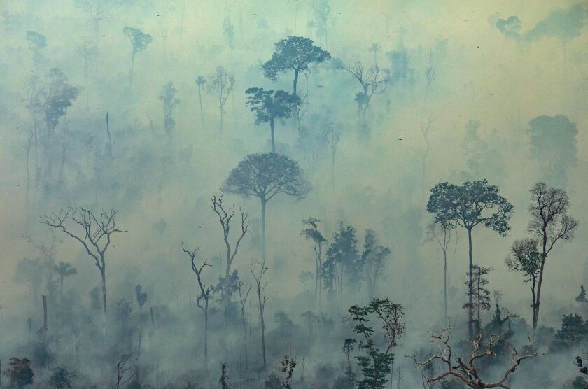 Trees obscured by smoke in the Amazon rainforest in northern Brazil