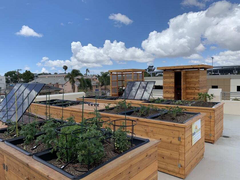Rooftop Garden at YMCA in City Heights