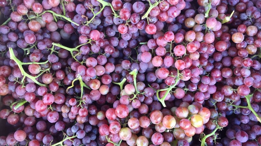 Grapes are in season. We have recipes