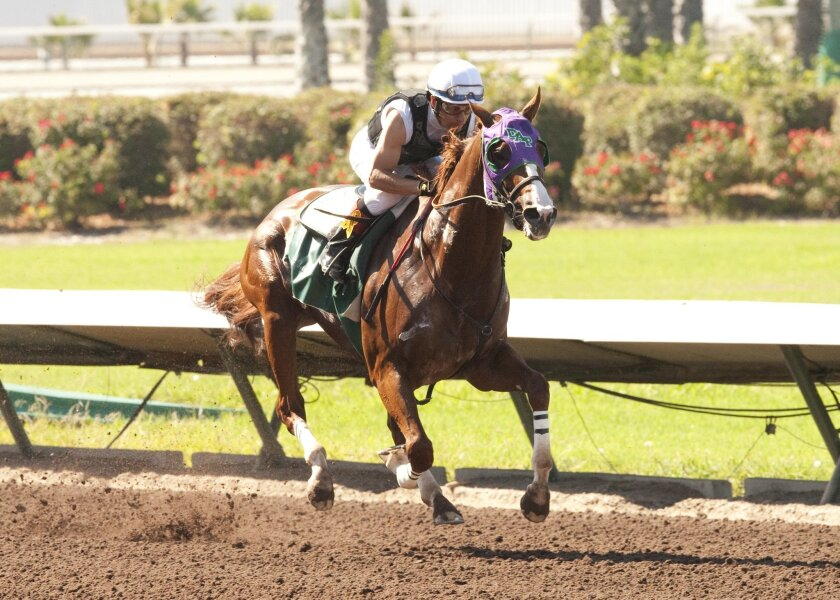 California Chrome has worked six times to prepare for Saturday's $1 million Pennsylvania Derby, but this will be his first race since the June 7 Belmont Stakes.