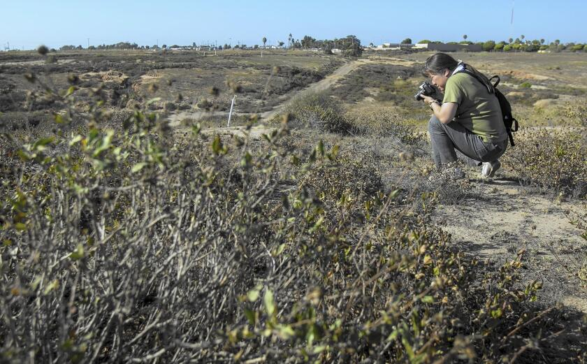 Schyang Ray of the Banning Ranch Conservancy takes photos of plants during a trip in 2014 to the site of a proposed development project at Banning Ranch.
