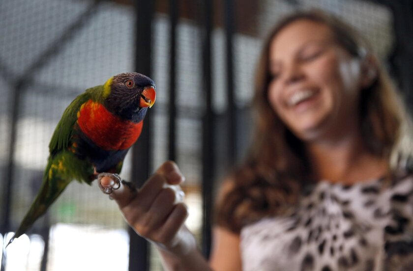 Rachel Harper, spokeswoman for the Living Coast Discovery Center, introduces visitors to a rainbow lorikeet, native to Australia.
