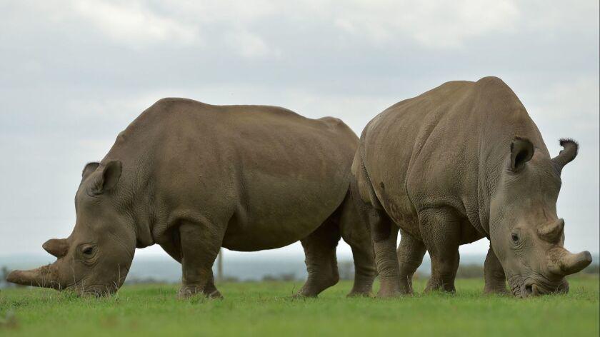 TOPSHOT-KENYA-ENVIRONMENT-ANIMAL-RHINO