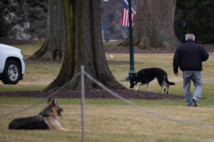 Champ and Major, President Biden's two dogs, on the South Lawn of the White House on Monday