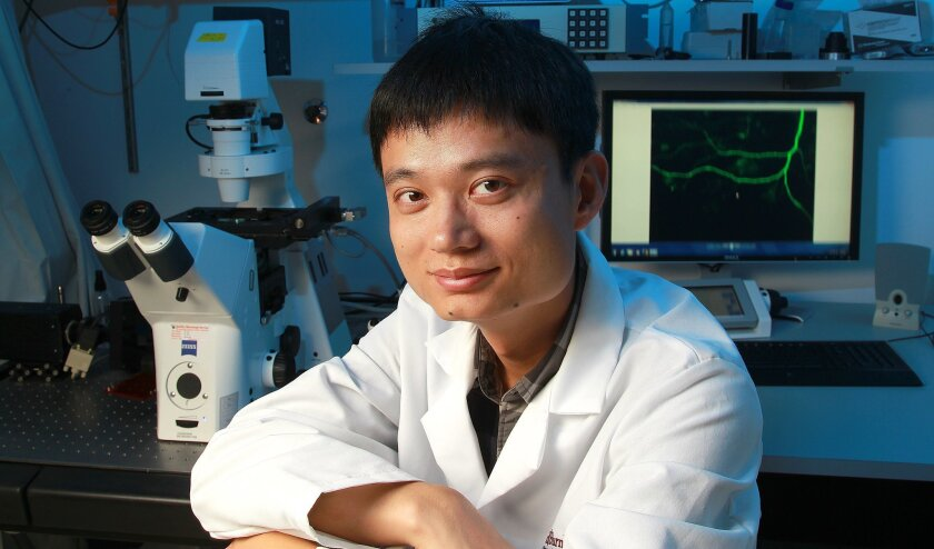 Yingjun Zhao and Dr. Huaxi Xu are the authors of a study being released Wednesday that looks at the protein appoptosin. They discovered that this protein seems to play an important role in Alzheimer's disease and another neurological disorder, progressive supranuclear palsy, or PSP. This finding ma