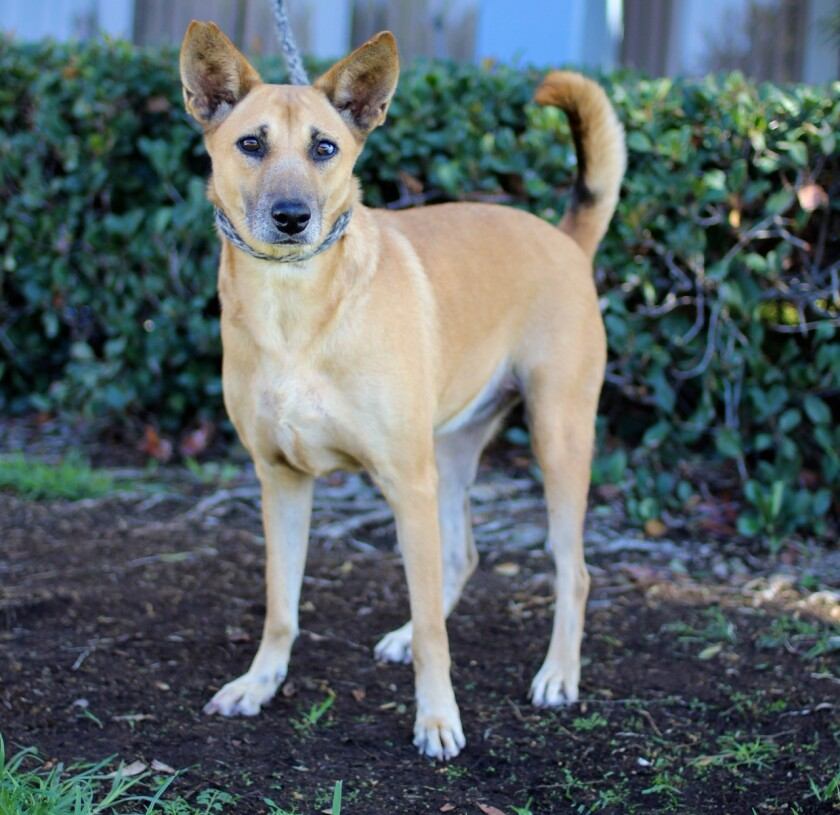 Alexa, a rescued dog