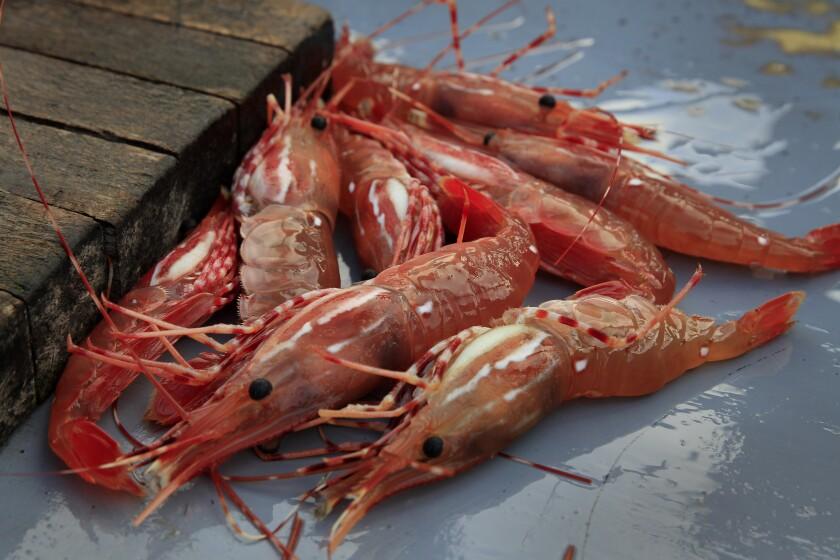 Dory Fleet fish market