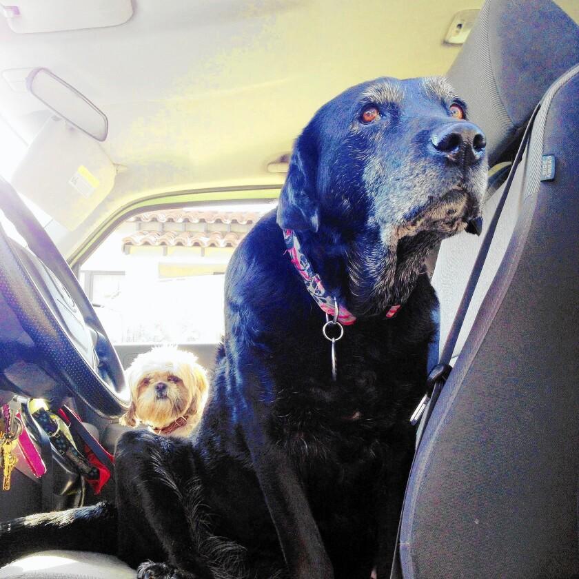 Rescuing a senior dog