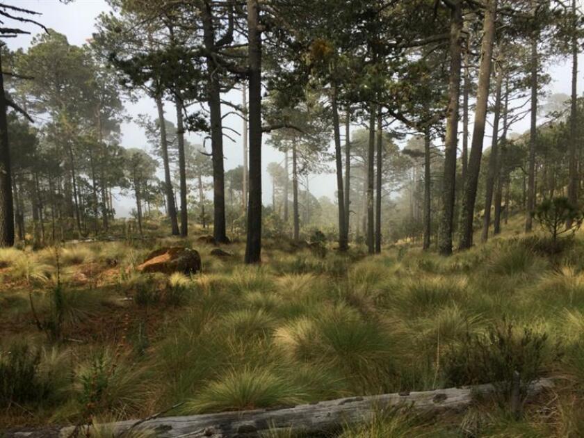 Fotografía que muestra un bosque en la localidad de Perote, en el estado de Veracruz (México). EFE/STR/Archivo