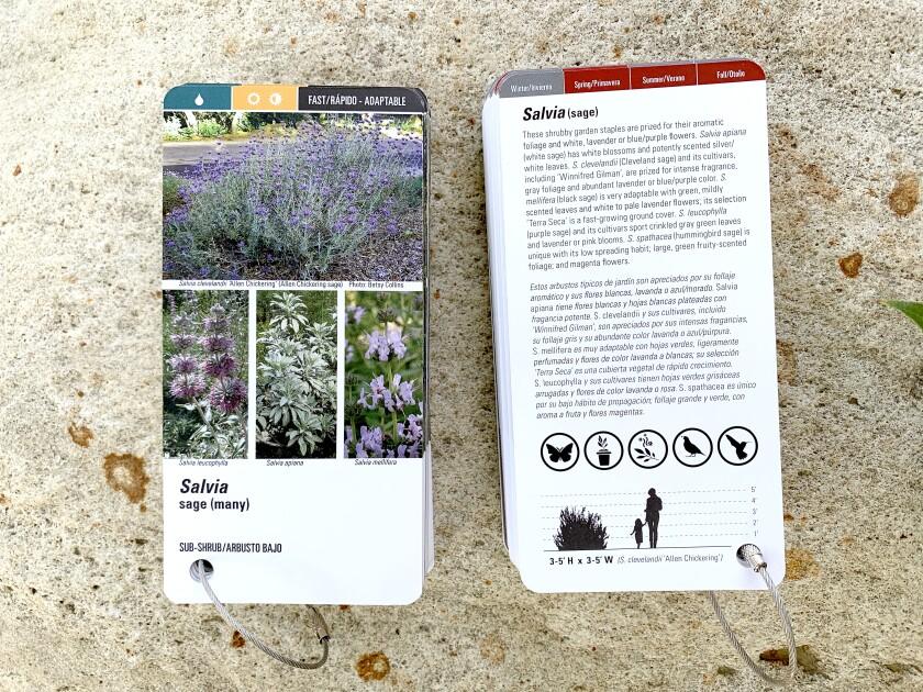 Theodore Payne Foundation Native Plant flashcards