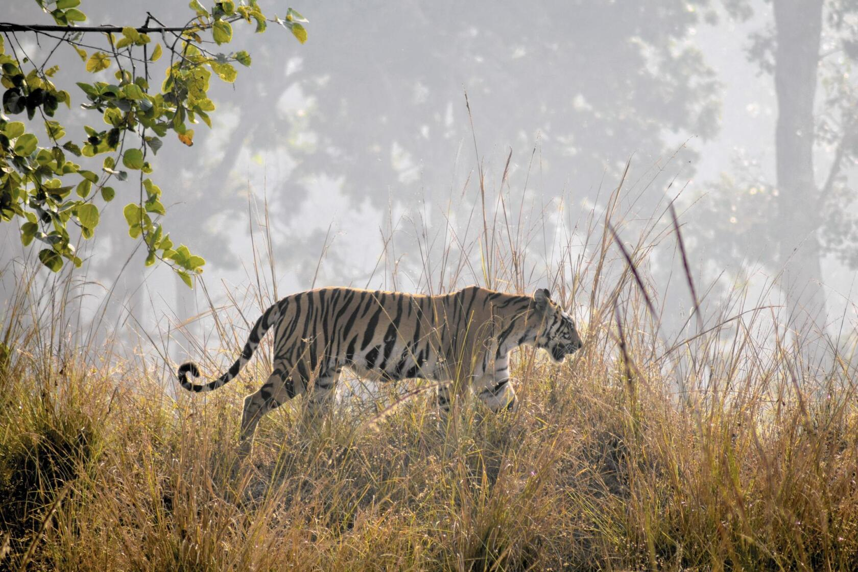 Out of India: Tracking big cats on safari through the 'Tiger State'