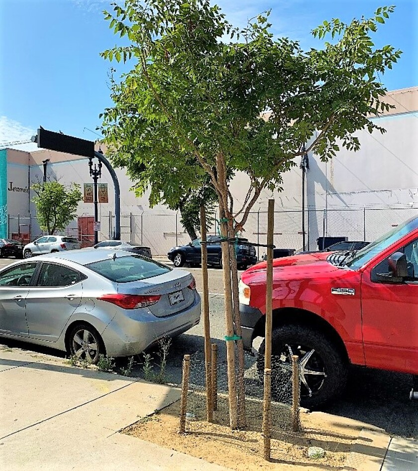 Trees for Art -- south F St. between 14th and 15th.jpg