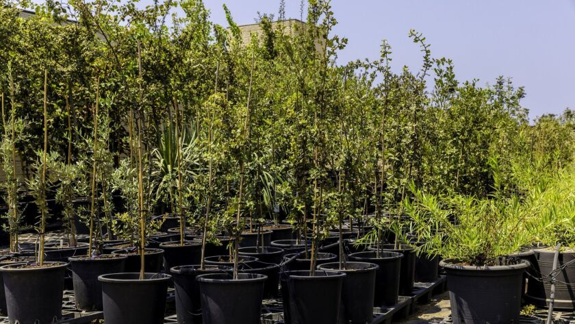 Once the weather cools in October, it's the perfect time to plant trees and shrubs.