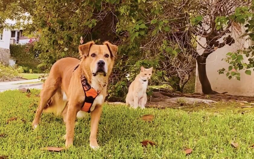 On their daily walks, Teddy and Jupiter serve as a furry neighborhood watch team.