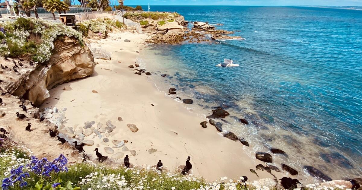 2 San Diego beaches named to Tripadvisor's top 25 in the U.S.