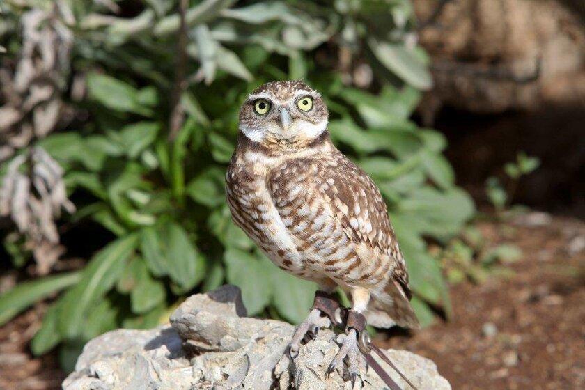 best_bet.owls