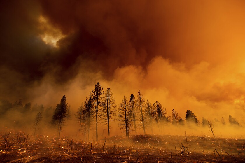 Smoke and embers are seen in a forest with charred trees