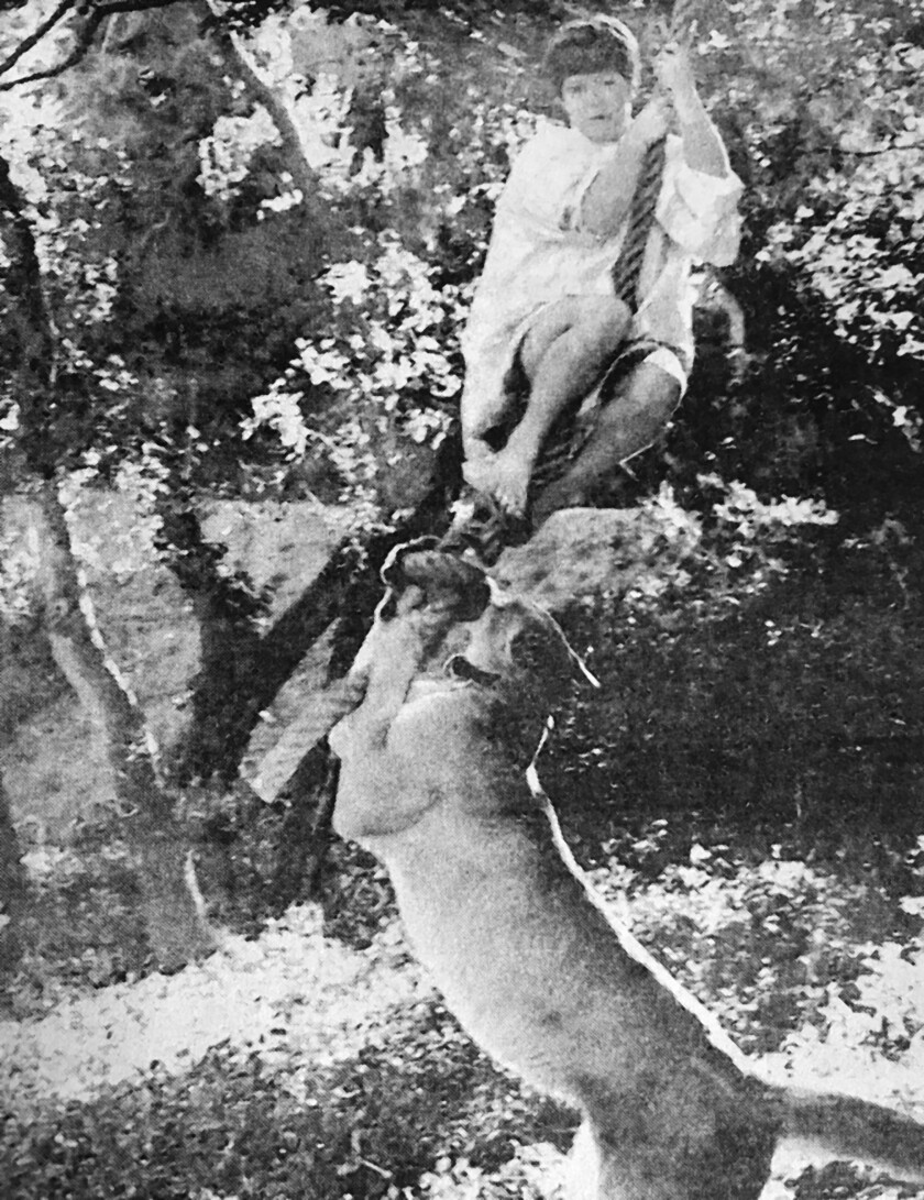"""In this 1970 photo, """"Susie,"""" the pet cougar belonging to an unidentified Flintridge family, frolics with Kimmy MacBride, an 8-year-old member of the La Cañada Junior Humane Society."""