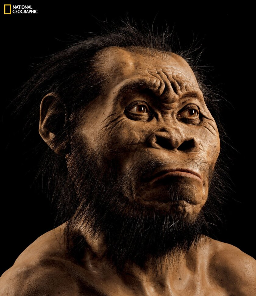 This photo provided by National Geographic from their October 2015 issue shows a reconstruction of Homo naledi's face by paleoartist John Gurche at his studio in Trumansburg, N.Y. Scientists say fossils found deep in a South African cave revealed the new member of the human family tree.