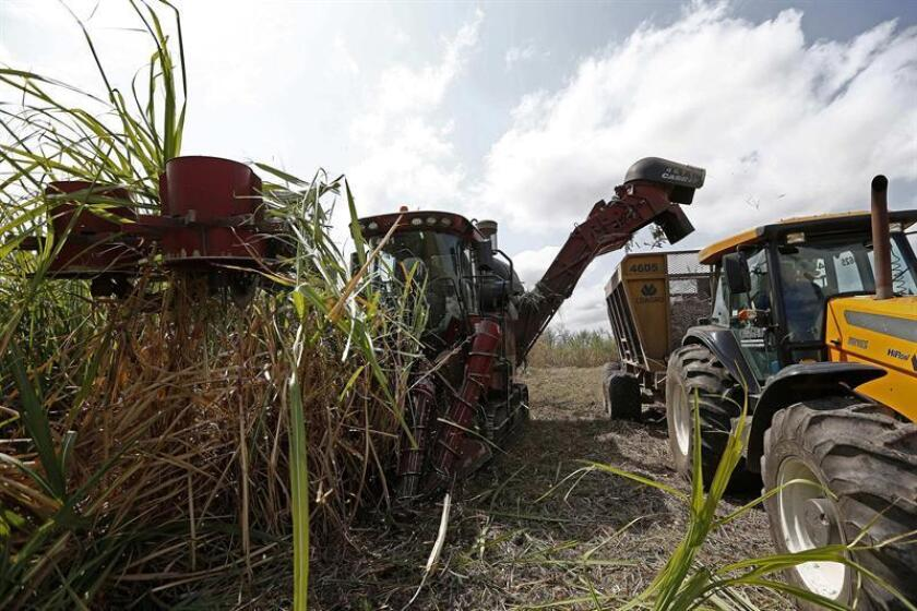 File image from Sept. 17, 2014: a machine harvests sugarcane at the Sapucaia Plant in the City of Campos, the northern region of Rio de Janeiro (Brazil). EPA/EFE/Archivo