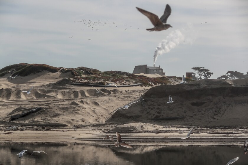 Sea gulls fly over a stretch of shoreline with a sand mine