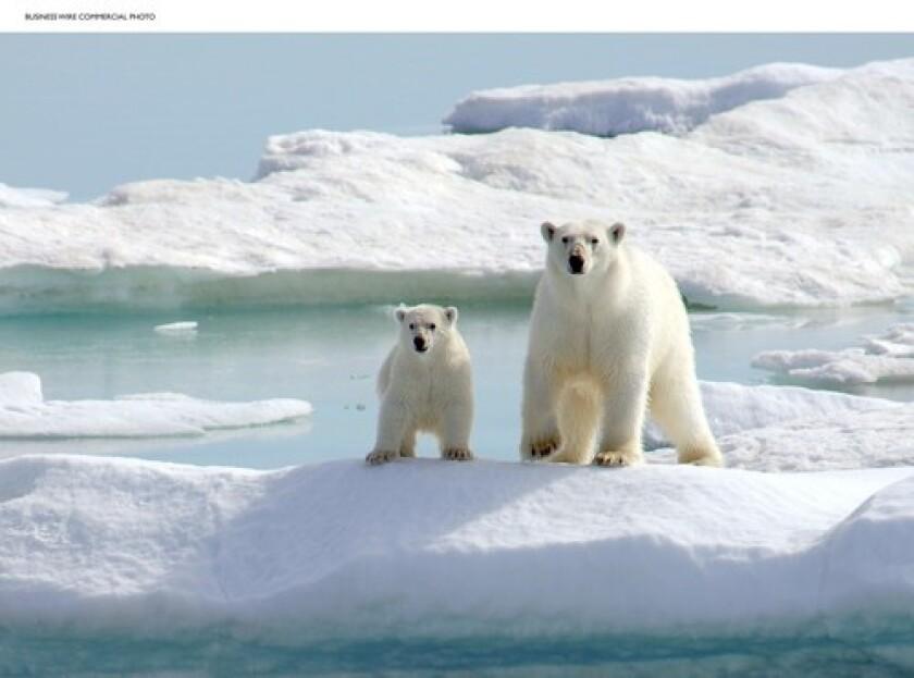 Un oso polar y un cachorro se aferran a un iceberg en las islas del Ártico en 2005.