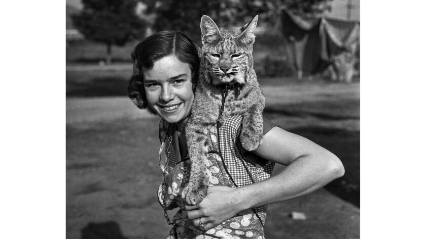 Dec. 9, 1935: Mrs. Mildren Olson with her pet Rocky Mountain lynx Gigi.