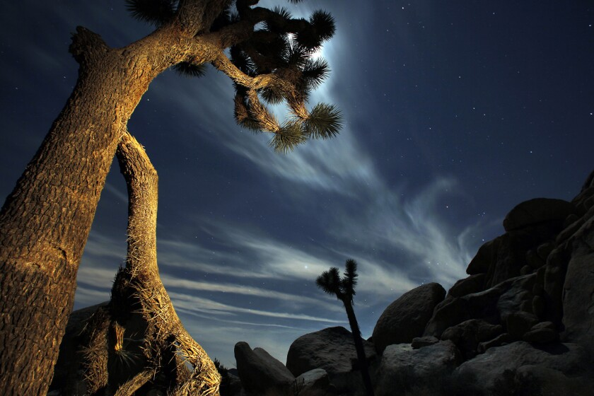 A bright moon illuminates the sky above the desert in Joshua Tree National Park. The park encompasses almost 800,000 acres and is about a three-hour drive from Los Angeles.