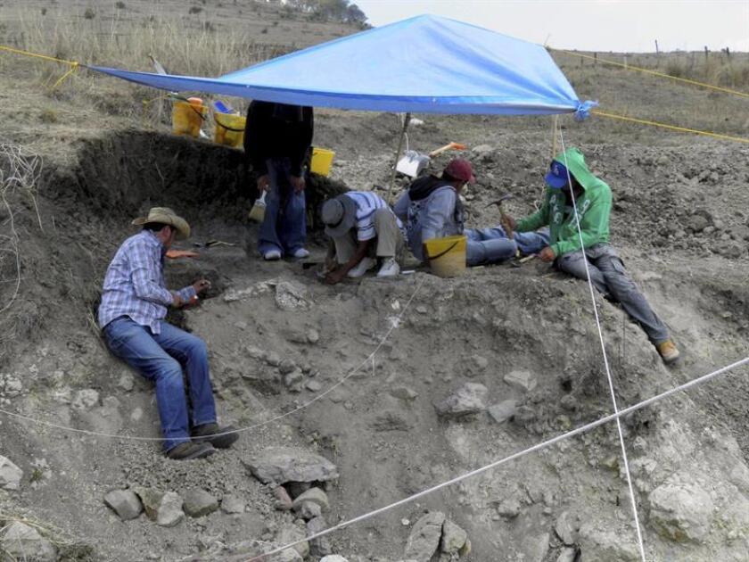El fósil de un pez de 60 millones de años fue hallado en Palenque y el de una mosca de 90 millones de años, en Tzimol, ambos en el estado de Chiapas, sureste de México, informaron hoy investigadores. EFE/INAH/ARCHIVO/SOLO USO EDITORIAL