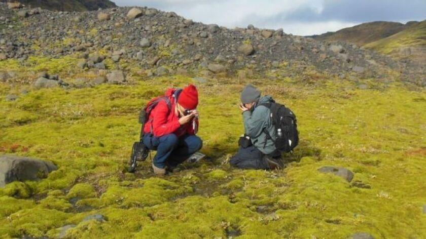 """Un """"reloj molecular"""" es la clave con la que un grupo de biólogos cuestiona lo que hasta ahora sabíamos sobre el origen del plantas."""